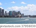 悉尼市 37956030
