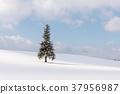 설경, 눈 경치, 나무 37956987