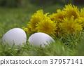 White eggs in the grass 37957141