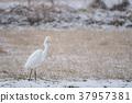wild bird, animal, animals 37957381