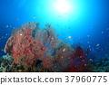 이소바나와 작은 물고기 37960775