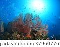 산호, 수중 사진, 산호초 37960776