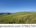 grass, field, grassland 37962790