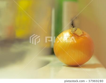Onion 37969280