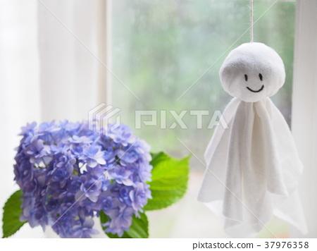 Teru Teru和尚和繡球花 37976358