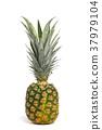 파인애플, 열대 과일, 트로피컬 후르츠 37979104