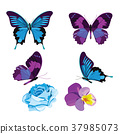 Set collection of blue and violet butterflies and 37985073