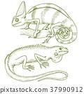 chameleon, reptile, lizard 37990912