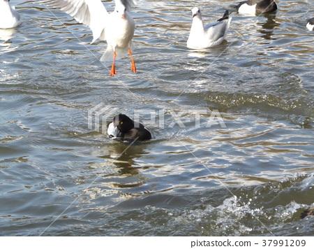 ฤดูหนาว,ผิวน้ำ,น้ำ 37991209