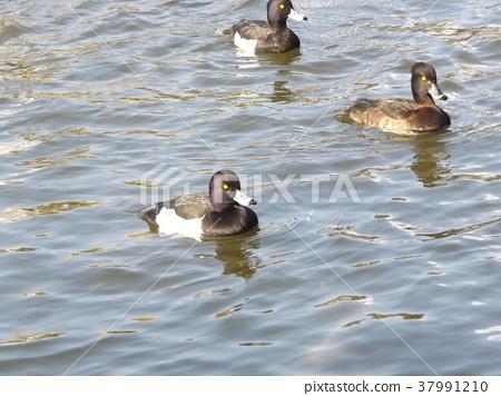 ฤดูหนาว,ผิวน้ำ,น้ำ 37991210