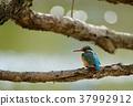 wild, bird, common 37992912