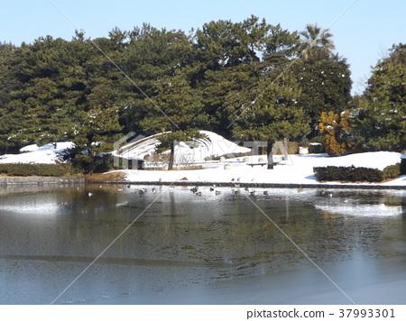 แหล่งน้ำ,สระน้ำ,น้ำแข็ง 37993301