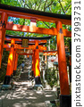 Fushimi Inari Taisha torii, Kyoto, Japan 37993731