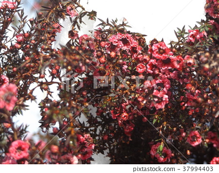꽃, 플라워, 분홍색 37994403