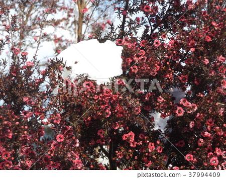 ดอกไม้,ฤดูหนาว 37994409