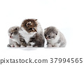kitten, cute, cat 37994565