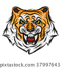 Tiger illustration print 37997643