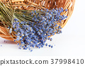 Bunch of lavender flowers on white background 37998410