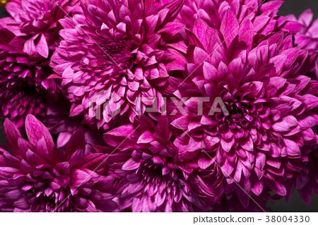 菊花 菊 花朵 38004330