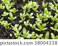 ดอกตูม,หญ้าอ่อน,ผัก 38004338