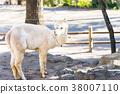 羊駝 邊路 回看 38007110
