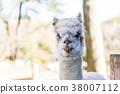 อัลพาก้า,สัตว์,ภาพวาดมือ สัตว์ 38007112