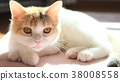 动物 猫 猫咪 38008558