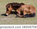 3-legged horse 38008708