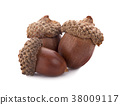 acorns on a white background ,close up 38009117