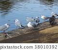 물, 까마귀, 흰색 38010392