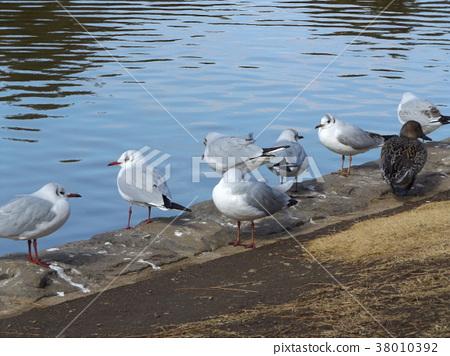 ฤดูหนาว,ผิวน้ำ,น้ำ 38010392
