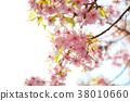 벚꽃 38010660