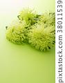 菊花 花朵 花 38011539