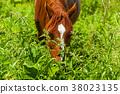 A horse eats field grass. 38023135
