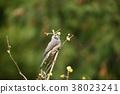 花贼(Hyodori吃一个小叶) 38023241