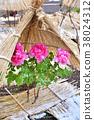 겨울 버튼 피는 후쿠오카시 하코 자키 궁 겨울 이미지 大寒 이미지 입춘 이미지 38024312