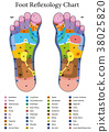 Foot Reflexology Table 38025820
