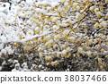 눈과 로우 바이 강설 로우 바이 로우 바이 설경 봄 아직 통하여 당황 38037466