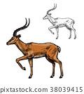 gazelle, antelope, animal 38039415