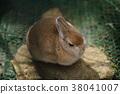 กระต่าย,สวนสัตว์,2023 38041007