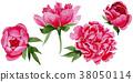 Wildflower red peonies flower in a watercolor 38050114