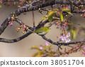川津 벚꽃과 동박새 38051704