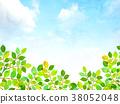 푸른 하늘, 파란 하늘, 잎 38052048