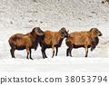 Sheep lin a line. 38053794