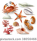 Set of illustrations seashells, coral, crab and 38056466