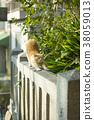 大江神社貓 38059013