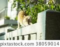 大江神社貓 38059014