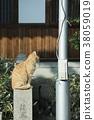 大江神社貓 38059019