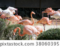 Animals in a zoo. various wild animals photo. 016 38060395