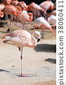 Animals in a zoo. various wild animals photo. 022 38060411
